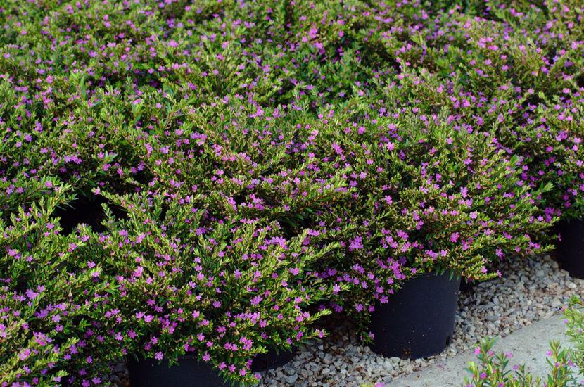 Vasetteria fotografia vivai pistoia vivaio bologna piante modena fiori pescia vasetteria prato